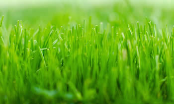 Lawn Service in Columbia MO Lawn Care in Columbia MO Lawn Mowing in Columbia MO Lawn Professionals in Columbia MO
