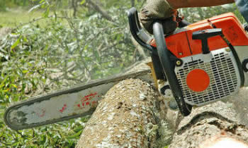 Tree Removal in Columbia MO Tree Removal Quotes in Columbia MO Tree Removal Estimates in Columbia MO Tree Removal Services in Columbia MO Tree Removal Professionals in Columbia MO Tree Services in Columbia MO