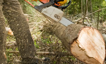 Tree Service in Columbia MO Tree Service Estimates in Columbia MO Tree Service Quotes in Columbia MO Tree Service Professionals in Columbia MO