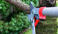 Tree Pruning Services in Columbia MO